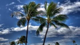 palms on beach at Oahu - Hawaii - Nort shore
