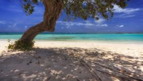 Beach Aruba ABC Islands Netherlands Antilles Caribbean Central America