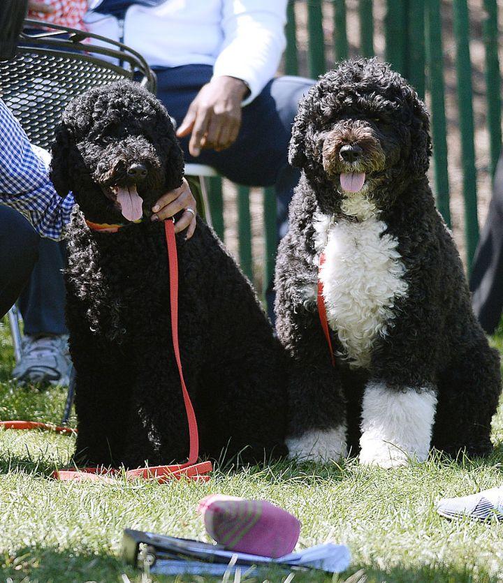 Dem Dogs