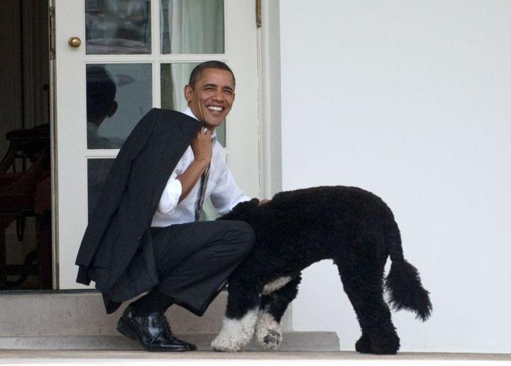 BARACK OBAMA ENGAGES WITH THE FAMILY DOG, 2012
